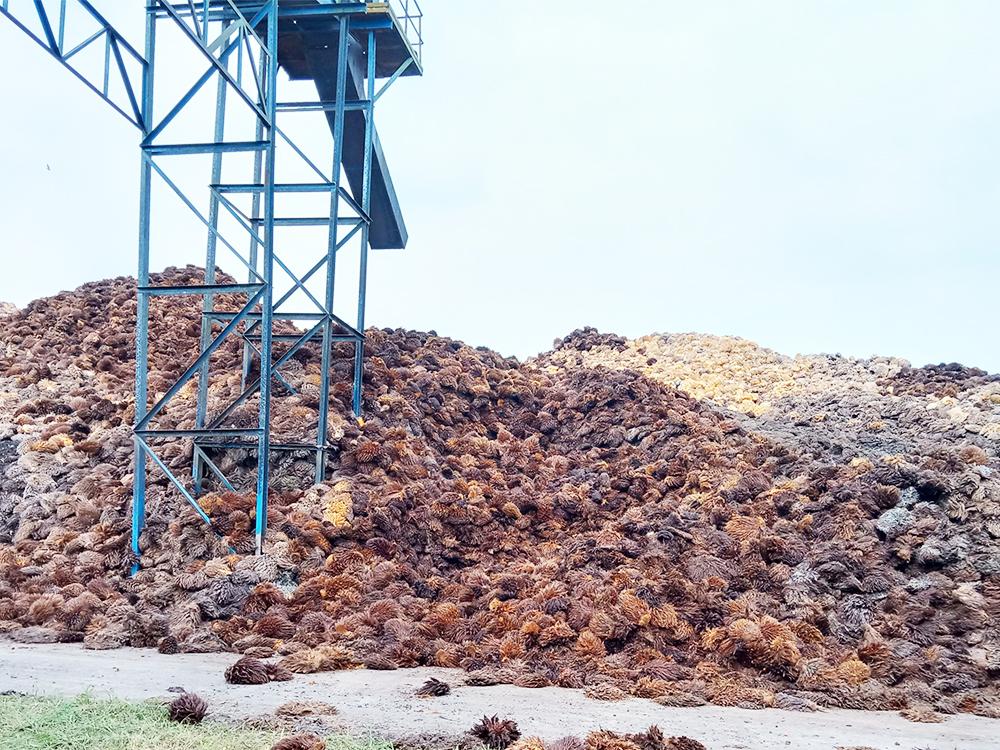 Mesin Pencacah Tandan Kosong (Tankos) Di Pabrik Pengolahan Kelapa Sawit